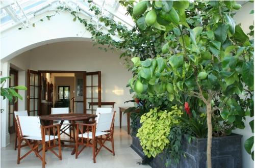 Ogród_zimowy_domowa_szklarnia_patio_ogród_w_domu_zieleń_pomysł_na_12