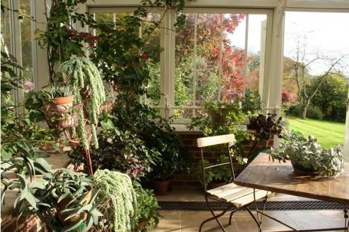 Ogród_zimowy_domowa_szklarnia_patio_ogród_w_domu_zieleń_pomysł_na_13