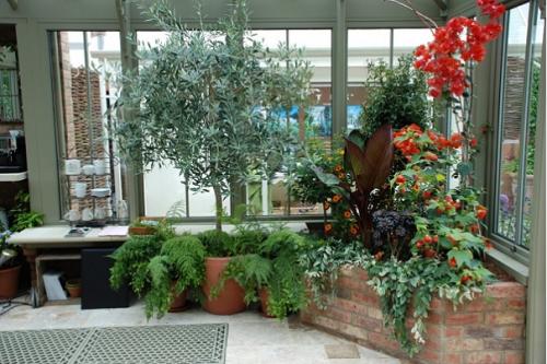 Ogród_zimowy_domowa_szklarnia_patio_ogród_w_domu_zieleń_pomysł_na_16