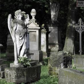 Stary_Cmentarz_w_Rzeszowie_Dawno_temu_w_domu_miejska_przestrzeń-18