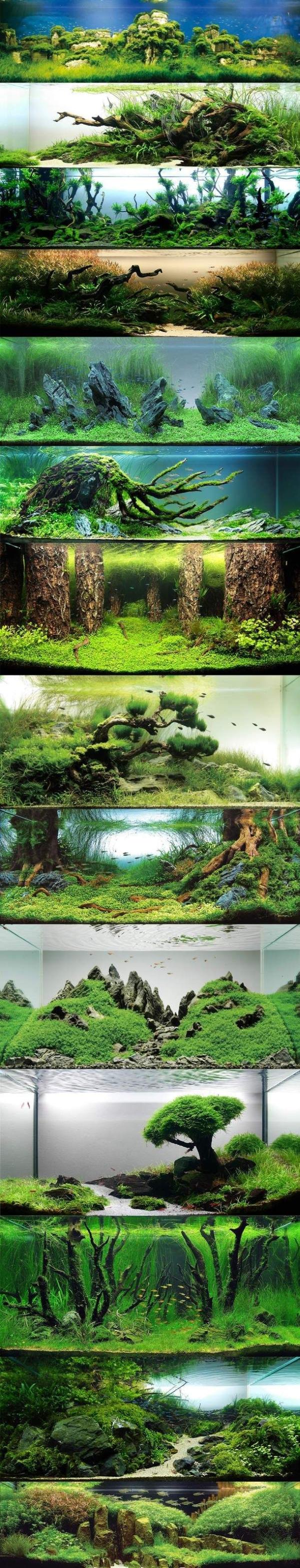 akwarium-we-wnetrzu-pomysly-design-jak-zalozyc-piekne-nowoczesne-1a