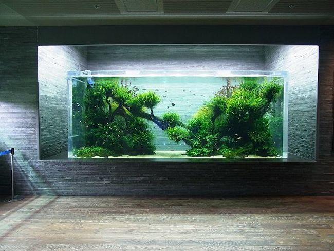 akwarium-w-pabie-kawiarni-restauracji-biurze-miejscu-komercyjnym-jak-projektowac-inspriacje-4