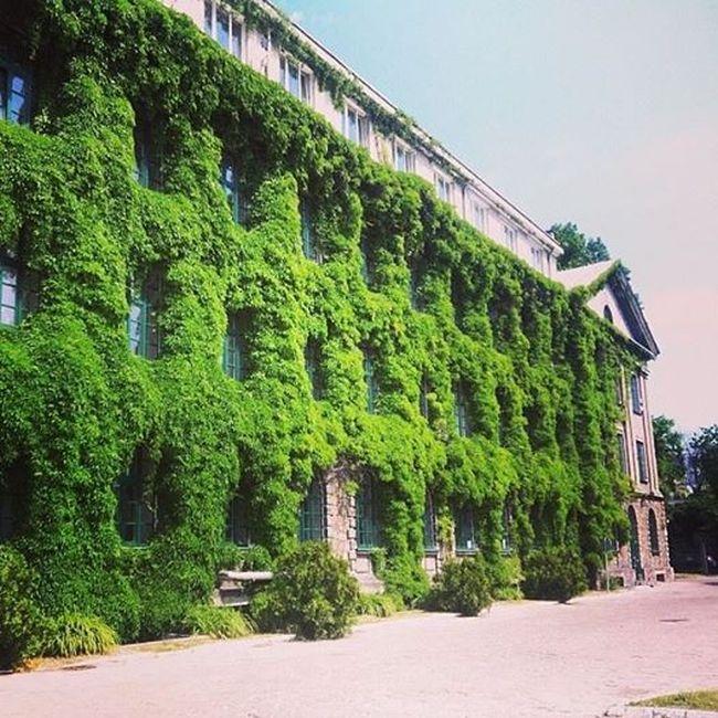 zielona-ściana-werykalna-zielen-blog-architektoniczny-pani-dyrektor-1