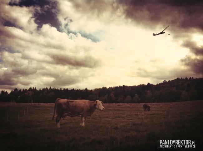 obraz-z-romantyczna-krowa-impresja-blog-architektoniczny-pani-dyrektor-01
