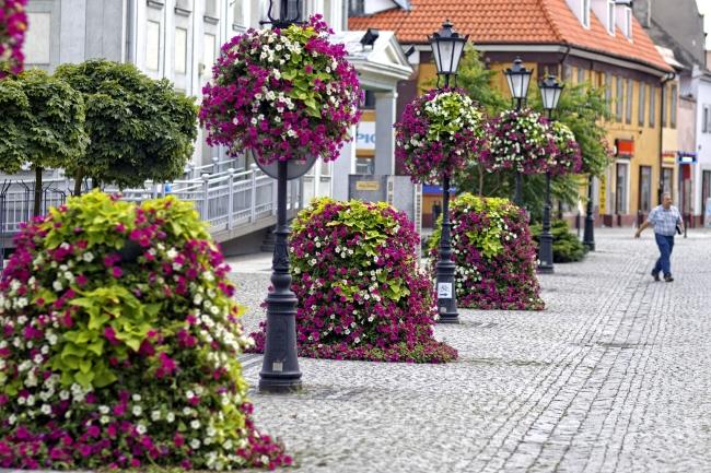 konkurs-na-najbardziej-ukwiecone-miasto-w-polsce-2015-plebiscyt-zielen-w-miescie-terra-flower-power-2