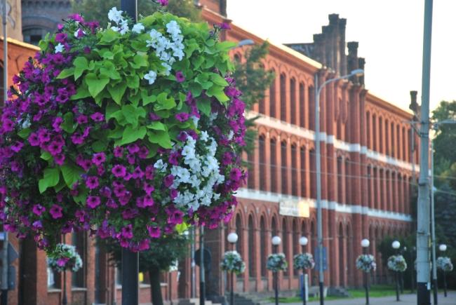 konkurs-na-najbardziej-ukwiecone-miasto-w-polsce-2015-plebiscyt-zielen-w-miescie-terra-flower-power-3