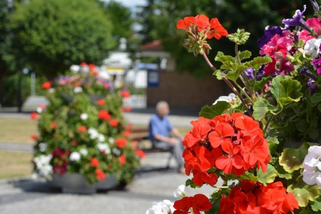 konkurs-na-najbardziej-ukwiecone-miasto-w-polsce-2015-plebiscyt-zielen-w-miescie-terra-flower-power-4