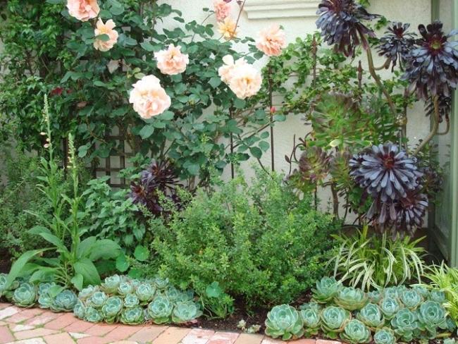 piękny ogródek zieleń przed wejściem do domu inspiracje pomysły na piękny ogródek zieleń 101