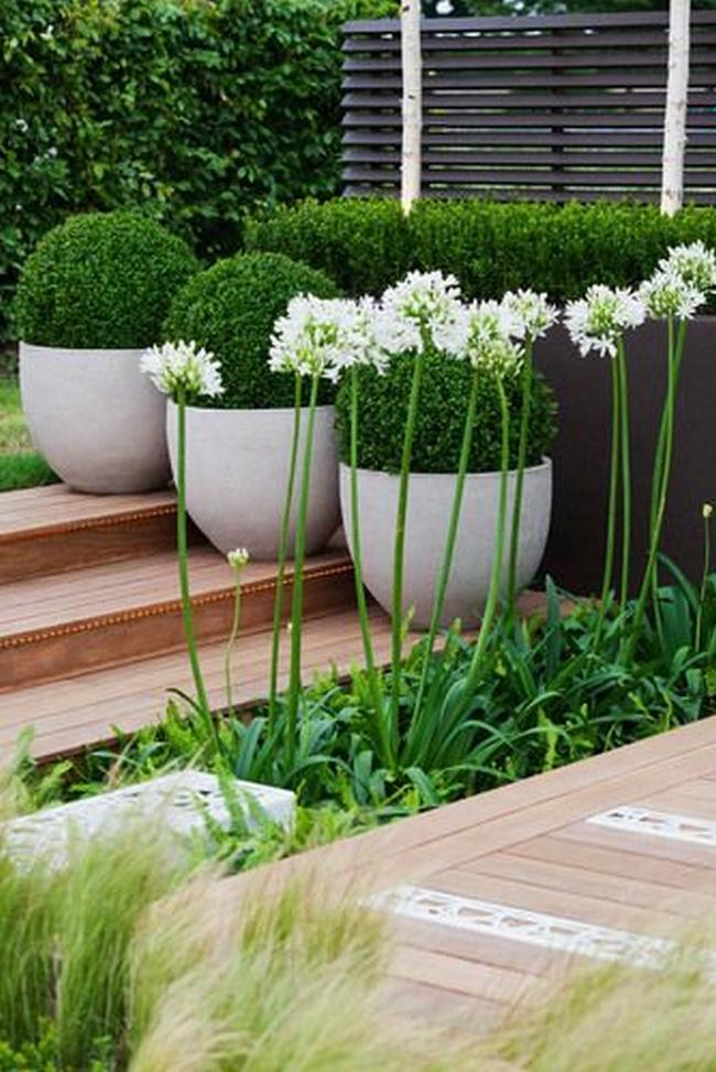 zieleń przed domem piękny ogródek zieleń przed wejściem do domu inspiracje pomysły na piękny ogródek zieleń 101