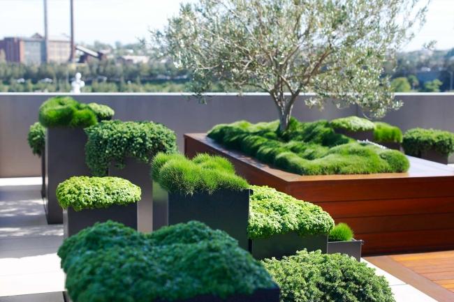 zieleń przed domem piękny ogródek zieleń przed wejściem do domu inspiracje pomysły na piękny ogródek zieleń 75