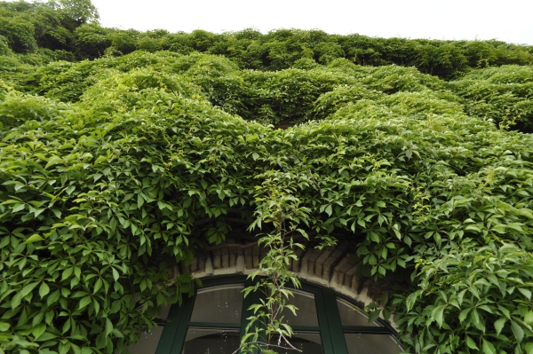 oryginalne materiały elewacyjne, beton architektoniczny, wertykalne ogrody, zielone elewacje, pnącza, płyty betonowe