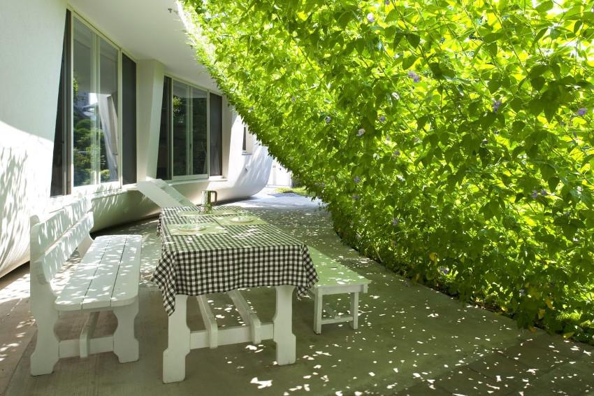 zieleń blisko domu, taras, balkon, zielone ogrodzenia, naturalne, ogród, pomysły, sposoby, tanie, rośliny, piękne, schody, wokół domu, bluszcz, pnącza, mała przestrzeń